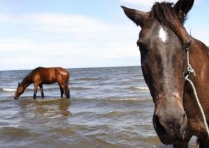 horse-300
